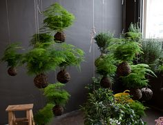 I think I'd like to try a few of these with rabbit's foot fern and hang them around the porch edge.