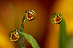 Dewdrop flower refraction by Lord V