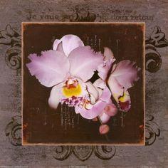 Framed Orchids II Lámina