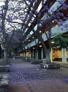 Facultad de Quimica UNAM Mexico City, Paradise, Plants, Creativity, Photography, Travel, Wallpapers, Iphone, Ideas