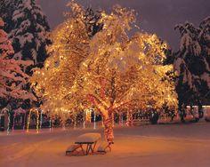 WinterSpirit.jpg (JPEG Image, 1045×833 pixels)