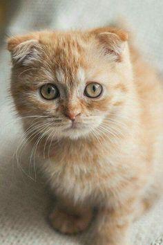 a very sincere kitten. #CatAndKittens