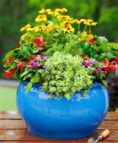 A colorful miniature cottage garden in a container will thrive throughout the summer. See our step-by-step instructions for creating this container.