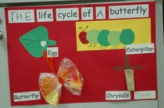 ,Life cycle of a butterfly