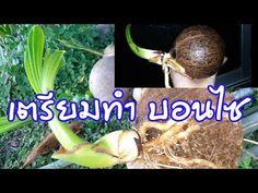 Bonsai, Content, Gardening, Youtube, Bonsai Trees, Garten, Bonsai Plants, Lawn And Garden, Youtube Movies