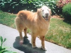 IMG 0471 300x225 Loss of a Dog: 3 Ways You Can Reduce Grief & Depression