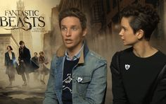 "addictedtoeddie: ""And finally…can you do an impression of a niffler? Fantastic Beasts and Where to Find Them interview 