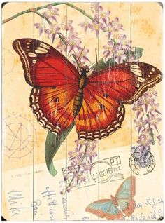 Natural Wonders Butterfly Vintage Wood Sign AH2