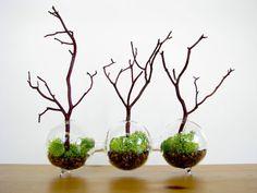 Modern Globe Manzanita Forest  Moss Terrarium by TinyTerrains, $50.00