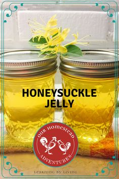 We cannot wait until the honeysuckles come back. This honeysuckle jelly recipe is so amazing! We tinkered with this while foraging on our homestead it's going to be an amazing sweet treat to cherish during the winter months. Jelly Recipes, Jam Recipes, Canning Recipes, Kitchen Recipes, Drink Recipes, Honeysuckle Jelly, Canning Food Preservation, Homemade Jelly, Jam And Jelly
