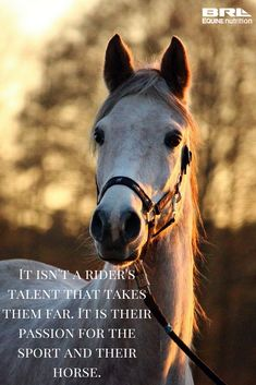Sometimes it isn't about the natural talent, fancy horses, and sponsorships. The dedicated and passionate rider will go further in different ways. They learn more about the relationship with their horse, they learn the benefits of hard work, and understand nothing great comes easy. Horse rider quote, equestrian quote #BRLequinenutrition #BRLequine #nevergiveup #passionateequestrian #barnrat