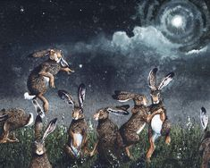 Canvas Frame, Canvas Wall Art, Canvas Prints, Art Prints, Moonlight Painting, Dancing In The Moonlight, Rabbit Art, Bunny Art, Illustrations