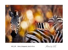Richard du Toit | COLOURS of AFRICA