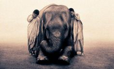 animals nature photography - gregory colbert ashes and snow - chicquero  listen elephant