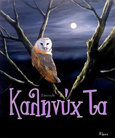 Sweet Dreams, Owl, Bird, Animals, Photos, Animales, Animaux, Birds, Owls