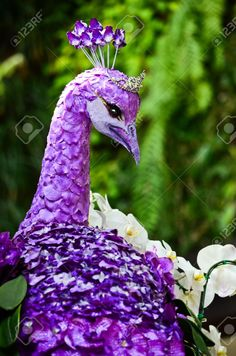 Peacock Made By Purple Orchids Stock Photo, Picture And Royalty Free Image. Image 14152000.