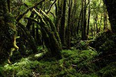 PATAGÔNIA - VIAGEM ao FIM do MUNDO. Patagônia, é um Paraíso Irreal da Terra, localiza-se entre a Argentina e o Chile. Florestas exuberantes são atração no Parque Nacional QUEULAT. Vanderlan Nader - Jornal Correio do Brasil.
