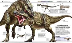 「First dinosaur encyclopedia」的圖片搜尋結果