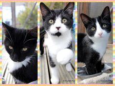 http://www.wearvalley.cats.org.uk/wearvalley/adopt-a-cat/?cid=55163
