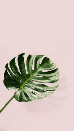 Blush and palm leaves
