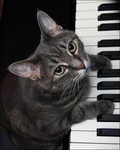 """There are 2 means of refuge from the miseries of life, music and cats."" --Albert Schweitzer"