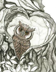 Baby Owl- Michael Rohner