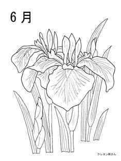 6月 花しょうぶの花の塗り絵の下絵 画像 花の塗り絵 ぬり絵 塗り絵 無料