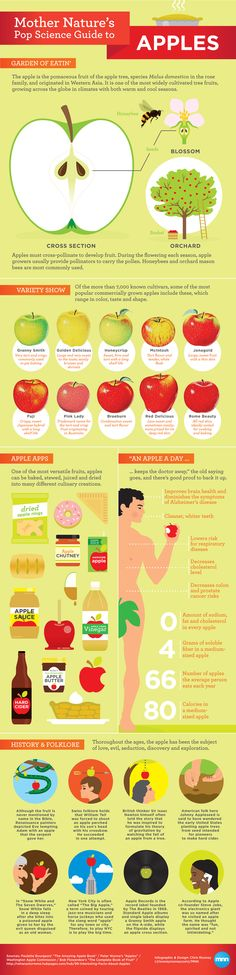 Mother Nature's Pop Science Guide to Apples - Infographic -  The apple is one of Earth's most iconic foods, symbolizing everything from health and beauty to evil and ingenuity.