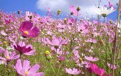 Imágenes de flores silvestres | todo en imágenes