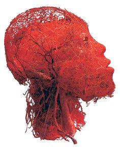 Los vasos sanguíneos de la cabeza y el cerebro (Gunther von Hagens, Institute for Plastination, Heidelberg, Alemania)