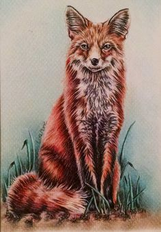 Hey, I found this really awesome Etsy listing at https://www.etsy.com/listing/229848843/fox-art-original-pencil-drawing-animal