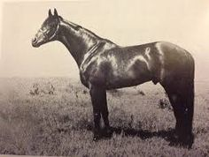 Hugh Lupus(1952)(Colt) Djebel- Sakountala By Goya. 2x3 To Tourbillon, 4(C)x3(F)x5(F) To Bruleur, 5x5 To Omnium. 17 Starts 8 Wins 4 Seconds 2 Thirds. $496,502. Won Irish 2000 Guineas(Ire), Railway Plate(Ire), Champion S(Eng), March S(Eng), Scarbrough S(Eng), Hardwicke S(Eng), 2nd Irish Derby(Ire), Middle Park S(Eng), Madrid Plate (Ire), Chesterfield Cup H(Eng), 3rd Queen Elizabeth II S(Eng).