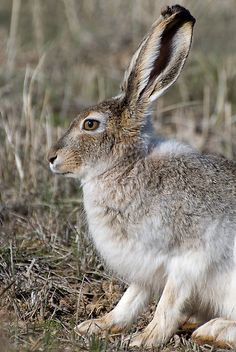 I always like seeing a jack rabbit.