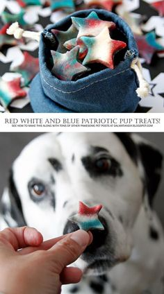 Red White and Blue Marbled Star Treats for Patriotic Pups DIY Dog Treats Positive Dog Training, Basic Dog Training, Dog Training Videos, Training Your Puppy, Diy Dog Treats, Healthy Dog Treats, Puppy Treats, Dog Training Treats, Training Dogs
