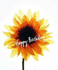 Best Birthday Quotes : Its your BIRTHDAY week! We u so much! Happy Birthday Wishes Cards, Birthday Blessings, Happy Birthday Pictures, Birthday Wishes Quotes, Happy Wishes, Happy Birthday Quotes, Birthday Week, It's Your Birthday, Birthday Morning