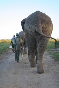 Sunrise walk with the elephants #gardenroute #southafrica #smithbday