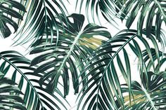 Jungle leaves vector pattern by Tropicana on @creativemarket