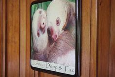 The sloth sanctuary has the best room names ever because they're named after sloths and any room named after a sloth is a pretty cool room, especially if the sloth's name is Johnny Depp.