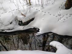 naturensdronning: Hanastadbekken i vinterdrakt