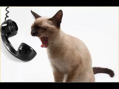 Кот и телефон! Федор борется с телефоном!)))