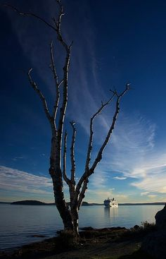 I was shooting the sunrise in Bar Harbor, Maine, when I noticed this large bare tree catching the sun's early light while it framed a cruise ship that was visiting in port.