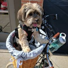 Hand crafted willow bicycle baskets for dogs, dog sunscreen, nautical themed dog collars and leashes Dog Collars & Leashes, Dog Beach, Collar And Leash, Nautical Theme, Bicycle, Dogs, Animals, Animais, Animales