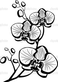Find orchid flower stock images in HD and millions of other royalty-free stock photos, illustrations and vectors in the Shutterstock collection. Thousands of new, high-quality pictures added every day. Outline Drawings, Art Drawings, Watercolor Flowers, Watercolor Art, Orchid Drawing, Orchids Painting, Stencils, Quilling Patterns, Rock Art