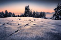 Photograph Snow Path by Stefan Hefele on 500px