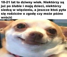 Stupid Funny Memes, Wtf Funny, Hilarious, Funny Lyrics, Cool Pictures, Funny Pictures, Polish Memes, Funny Mems, Quality Memes