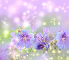 31 Best Free Beautiful Desktop Wallpapers Images Flowers Spring