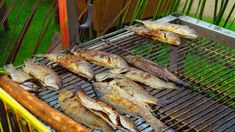 Check out top restaurants and bars on the Brac island. Find the best Brac restaurant and night bar for prefect holiday. Grilled Trout, Top Restaurants, No Cook Meals, Seafood, Grilling, Nutrition, Fish, Island, Meat