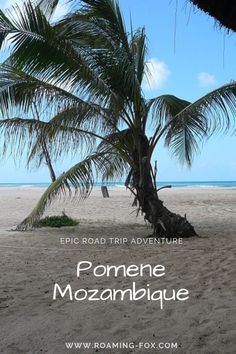 Pomene Mozambique. Selfdrive road trip adventure to Pomene. #Mozambique #selfdrive #roadtrip #adventureinafrica #africa #selfcatering #accommodation Fox Facts, Road Trip Adventure, What You Can Do, Van Life, Vip, South Africa, Travel Inspiration, Eye Candy, Travel Tips