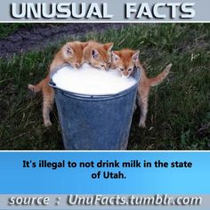 It's illegal to not drink milk in the state of Utah.