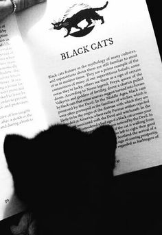 Sadly this bit of history is so true & even to this day since sometimes black kittens are harder to place for rescue. Read it & weep. Crazy Cat Lady, Crazy Cats, Catch The Cat, Elf Cat, Black Cat Aesthetic, Cat Mouse, Wishes For Baby, Beautiful Cats, Cat Breeds